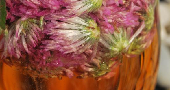 Kleeblüten-Limo